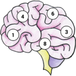 Brain Memory Exercise MOD Unlimited Money 1.12