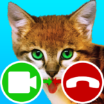 fake call video cat game MOD Unlimited Money